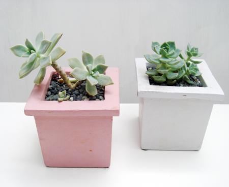 4多肉植物7.jpg
